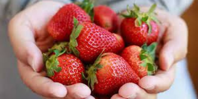 STRAWBERRY AS A POWER HOUSE OF   NUTRIENTS